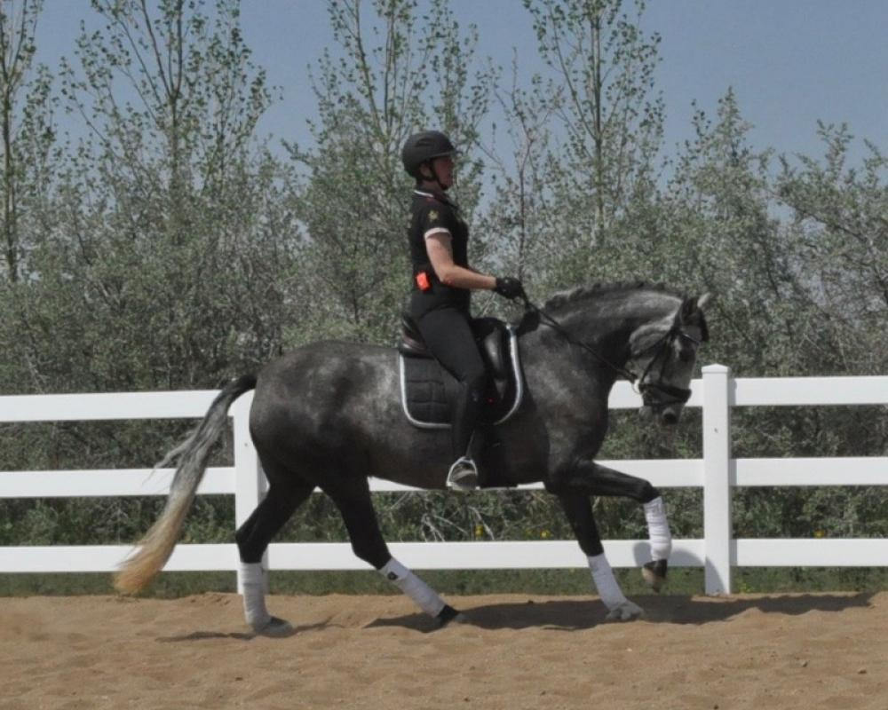 canter right rein