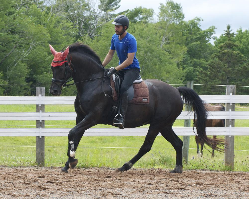 Hosanna, 7 years old,  only a few weeks back under saddle after an almost 2 year hiatus. Being ridden intermittently due to heat wave and high humidity