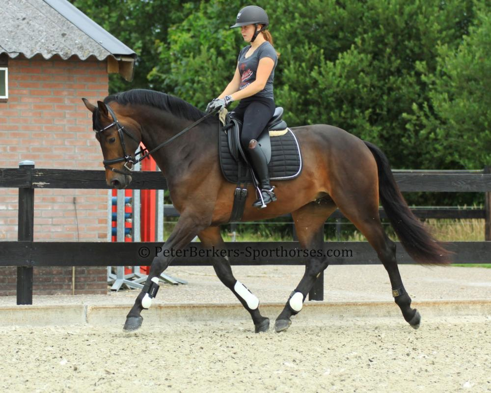 Lamour - dressage horse World Champion Glamourdale x Grand Prix Olympic Jazz for sale