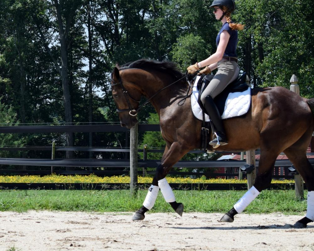 powerful canter