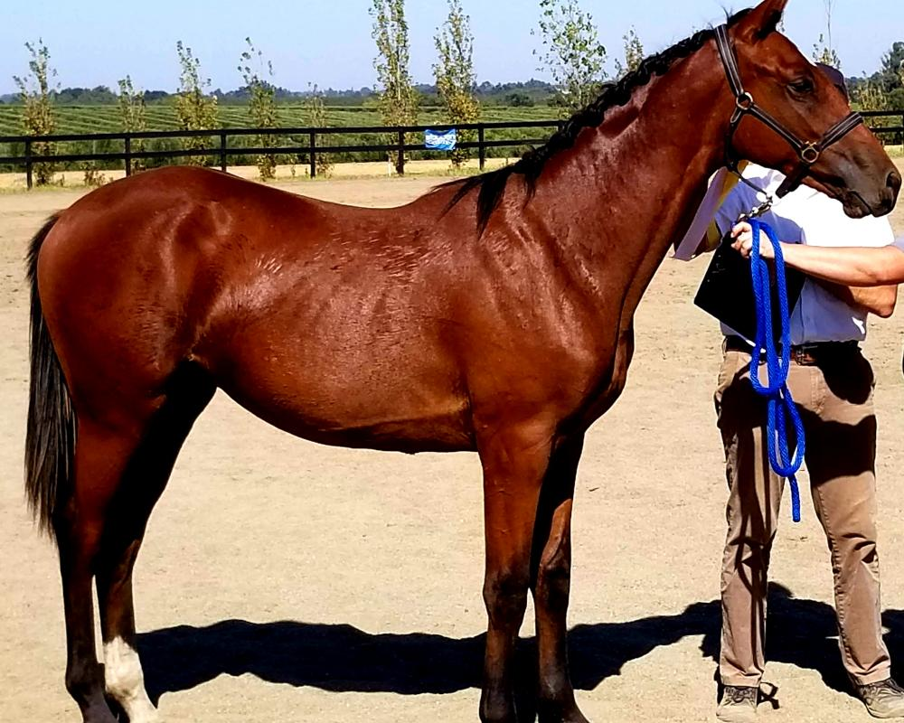 Winning Reserve Champion Futurity yearling