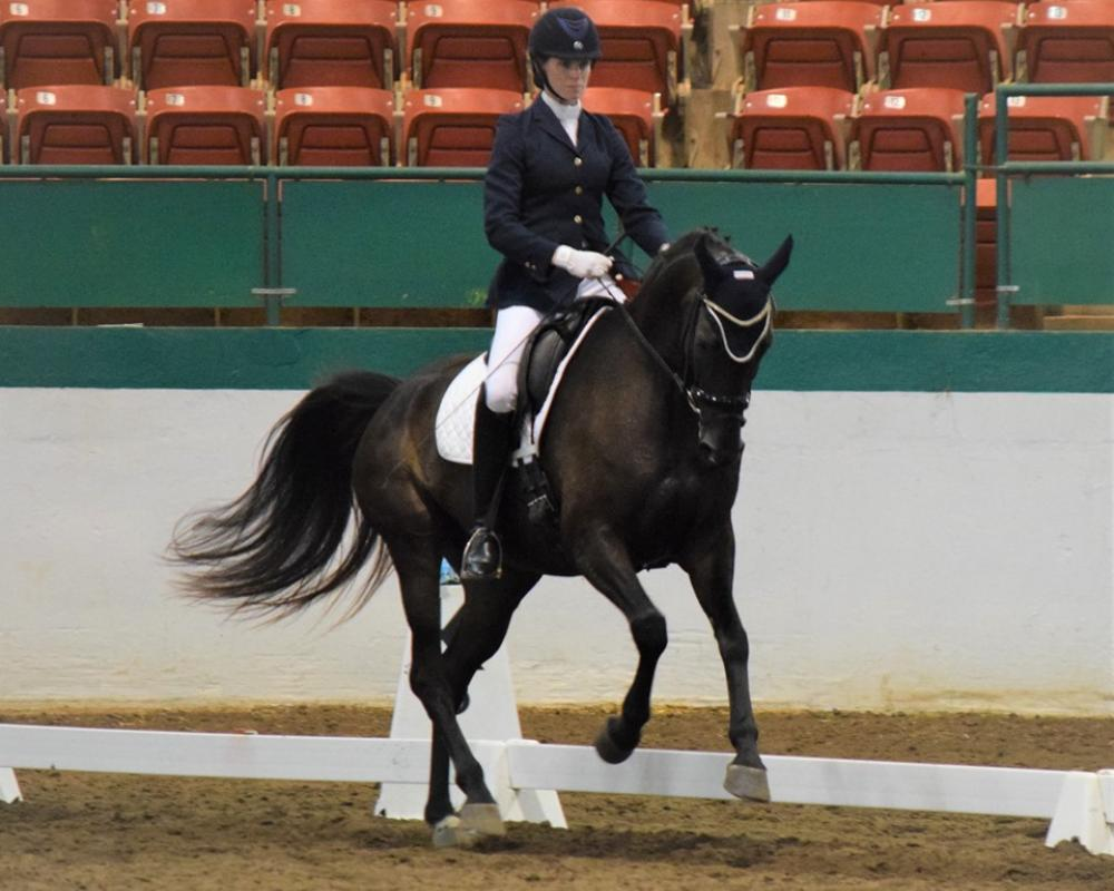 VPrSt Dekadence, sister just starting her performance career...won 2x Born in USA awards and High Scores in just a few shows qualifies for regionals and BLM's,  started under same trainer!