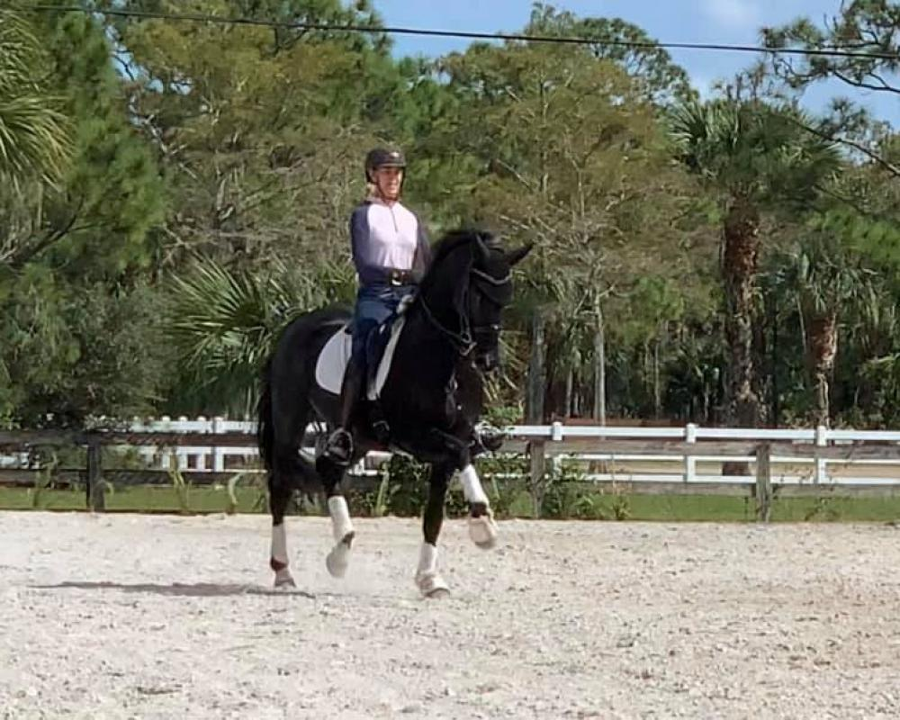 Dante is a showstopper, look at those gaits!