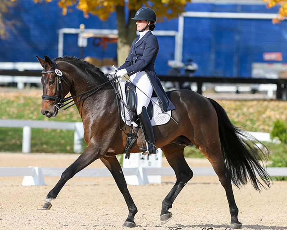 Schroeder (Sandro Hit x Escudo I) Grand Prix Dressage Stallion