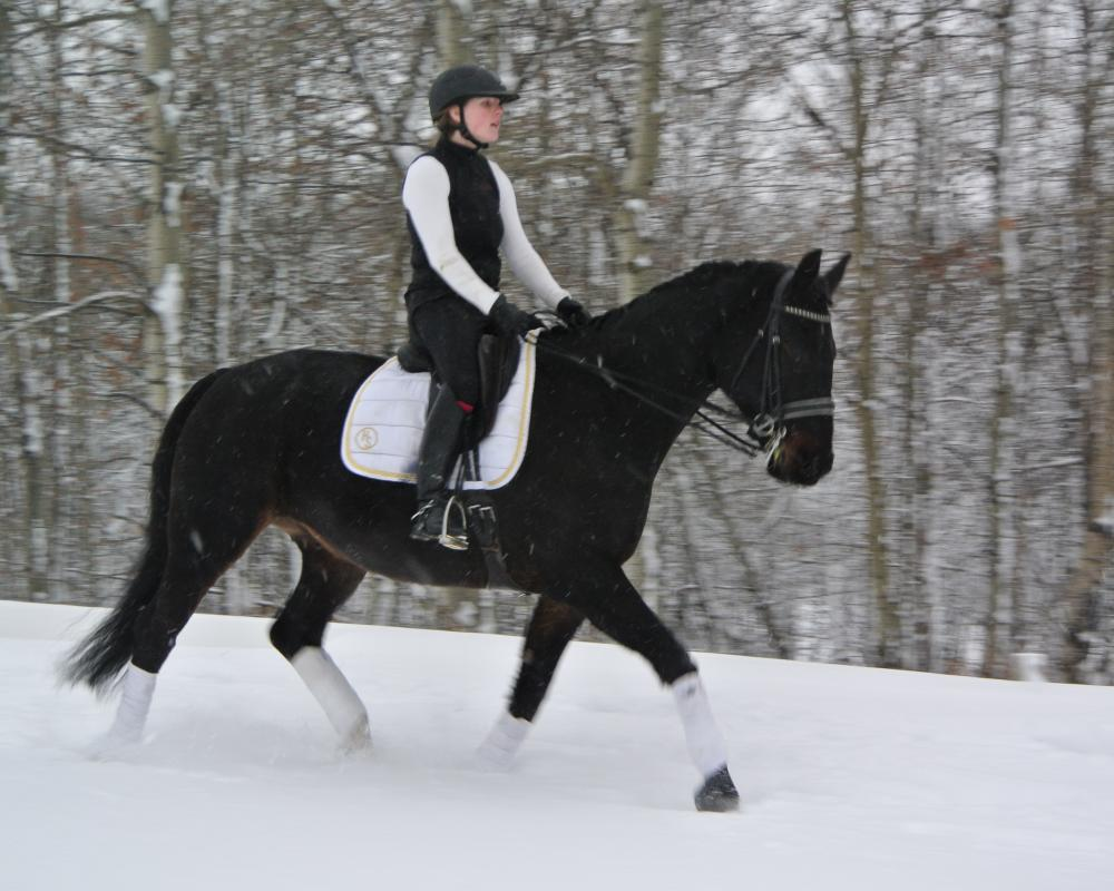 Winsome - Snow Trot