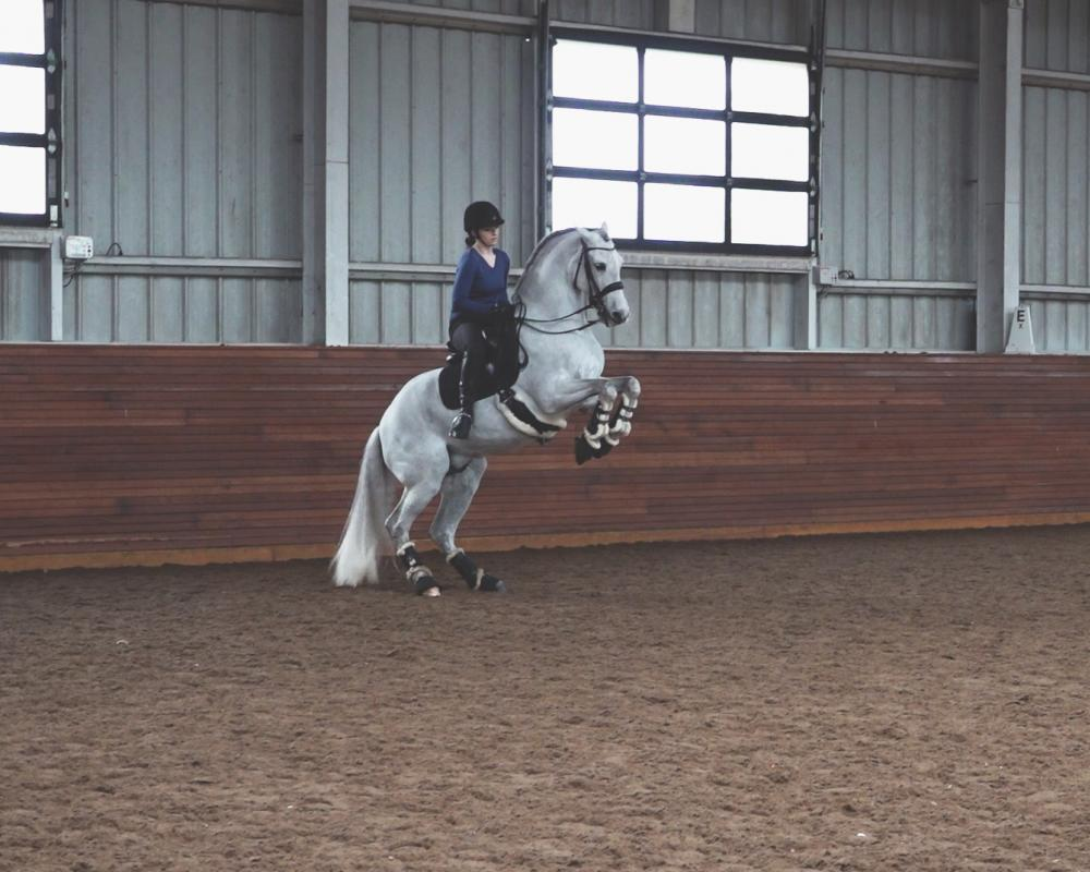 Pesade Under Saddle