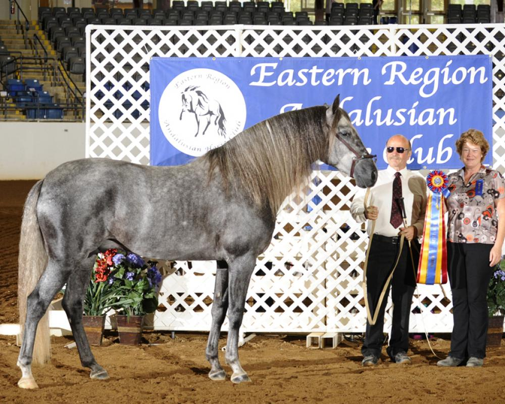 DEM El Regalo at the ERAHC Classic Horse Show as a 5 year old.