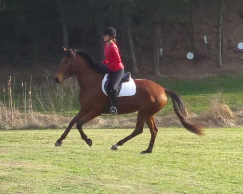 Cantering between jumps 3/14/20
