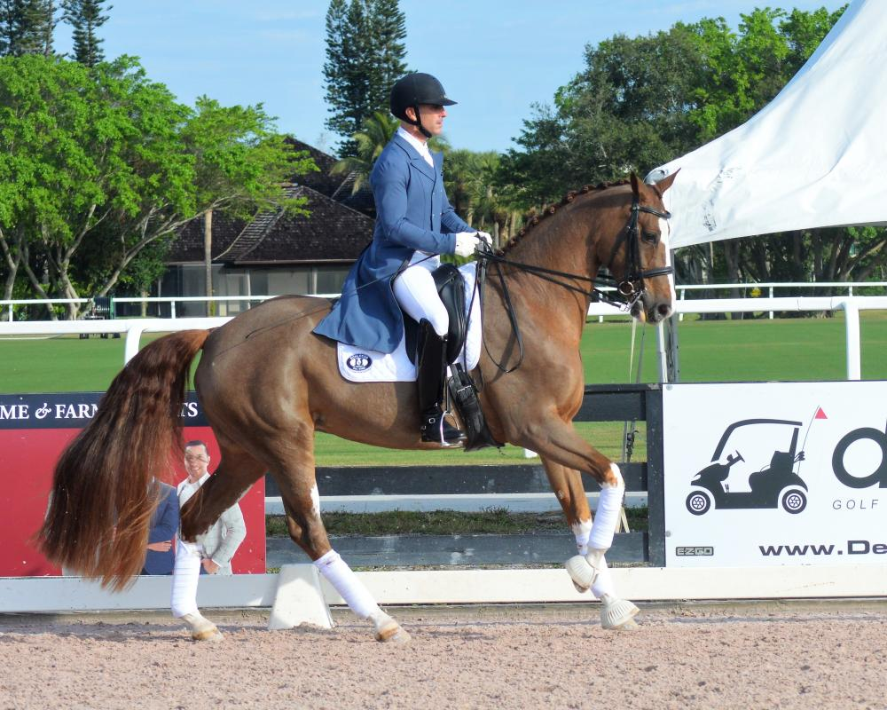 Successful FEI Competitor for sale