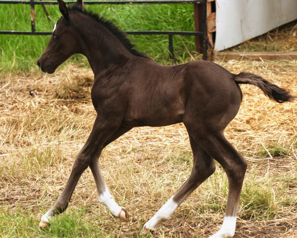 baby canter