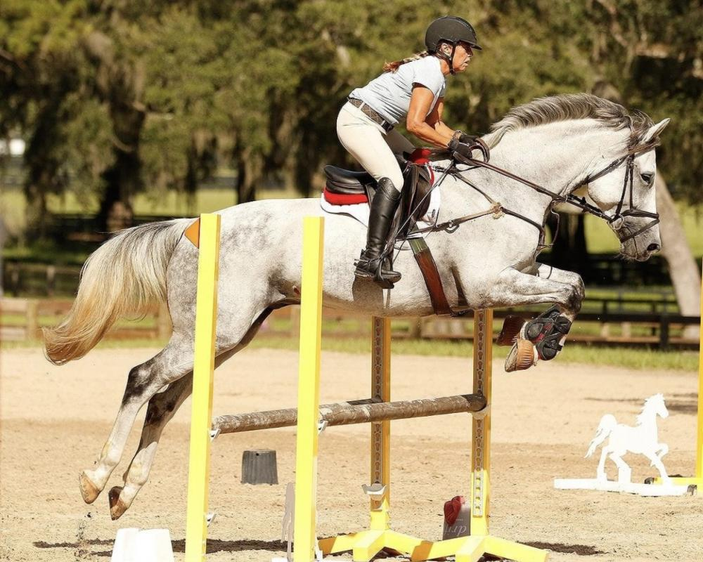 Jumper/Equitation/Dressage