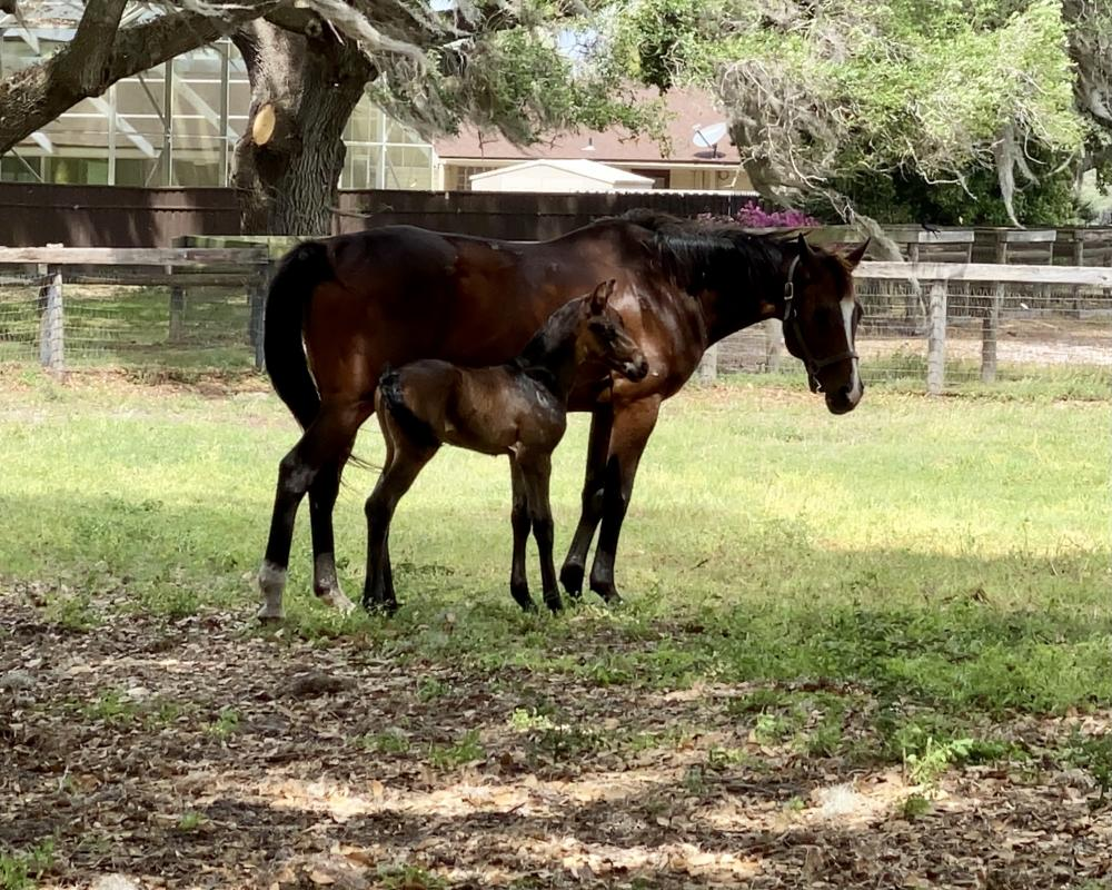 Colt by Franklin x Skovens Rafael