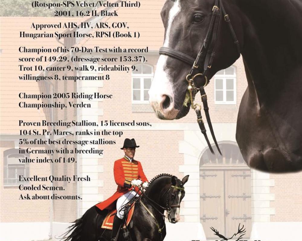 Stallions | Warmblood Sales