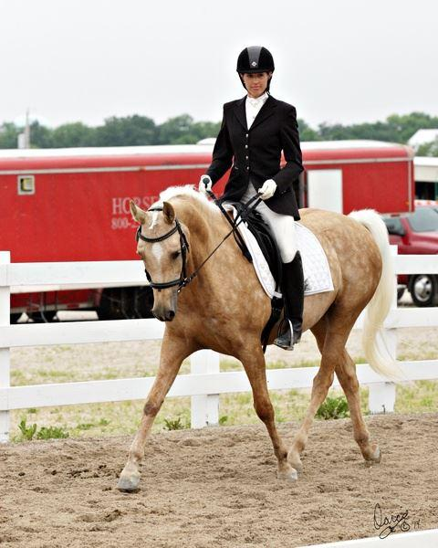Have You Tried: Western Dressage - Horse&Rider