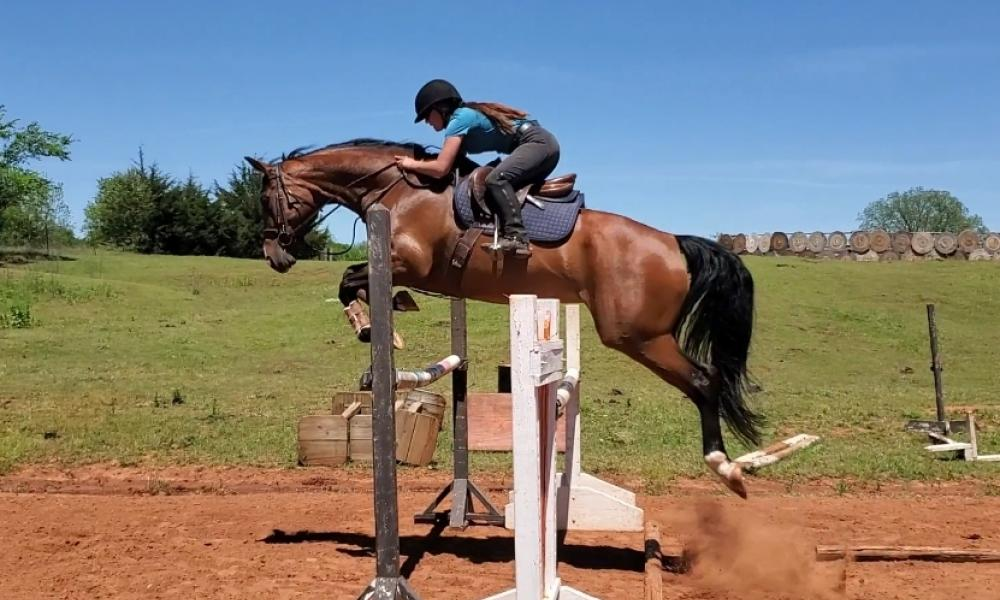 Super talented mare for the serious competitor