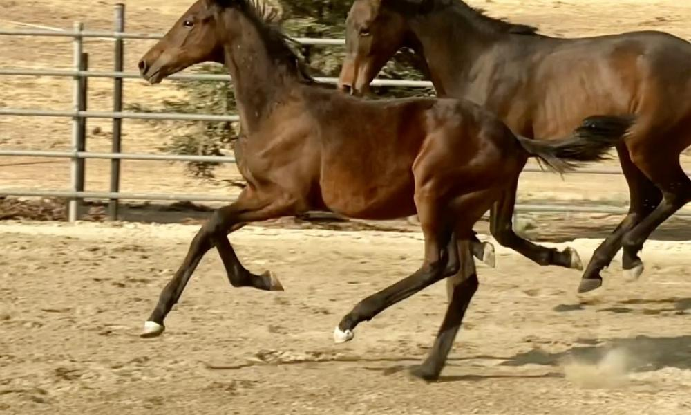 5 month canter
